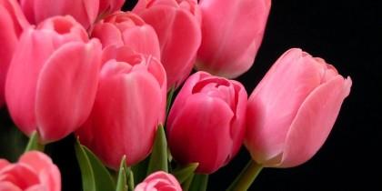 Tulipani come sculture