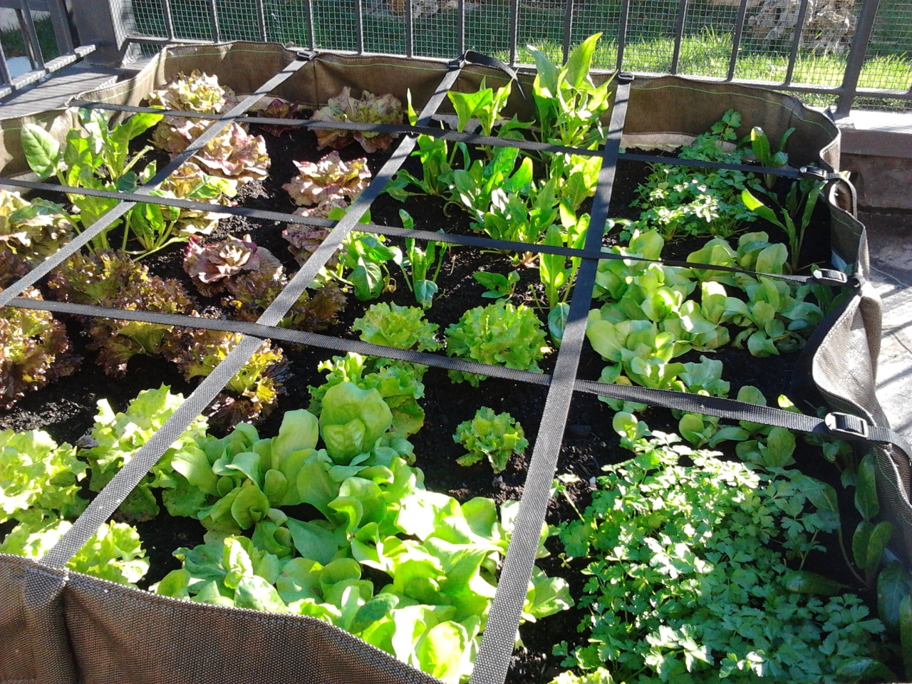 Un piccolo orto sul proprio balcone grey panthers - L orto in giardino ...