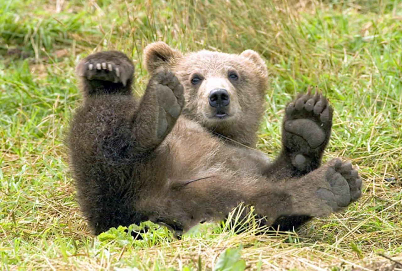 plitvice05m orso bruno