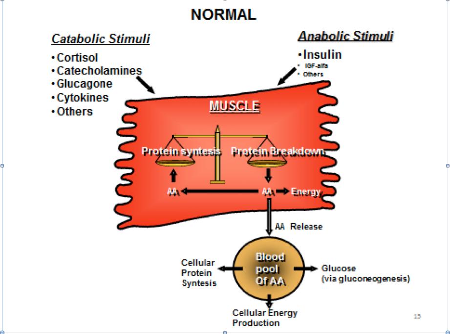Nelle condizioni di normalità la bilancia catabolica/anabolica è perfettamente in equilibrio. Il risultato è una perfetta omeostasi metabolica. Di fatto, le proteine che vengono degradate ad AA sono ri-sintetizzate all'interno delle cellule utilizzando gli AA liberati. Una certa quantità di AA viene rilasciata nel circolo ematico a formare il poll ematico di AA a disposizione per l'organismo.