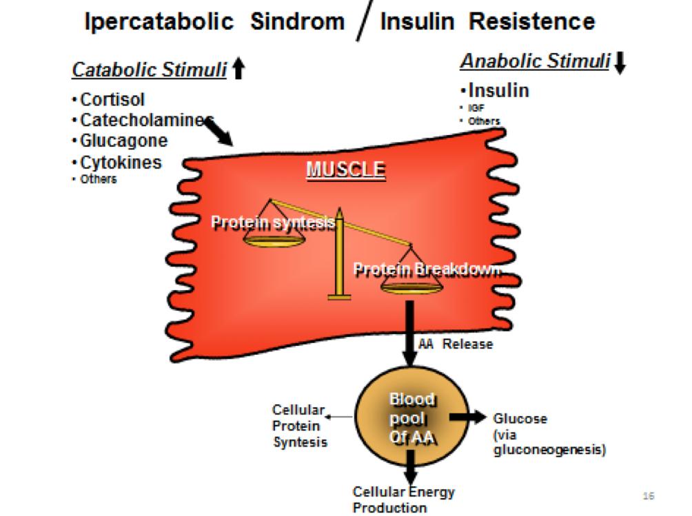 In condizione di SI la bilancia catabolica/anabolica è fortemente sbilanciata verso il versante catabolico. Il risultato è l'aumentata demolizione proteica e il rilascio degli AA nel sangue, dove vengono trasportati alle varie cellule (in particolare epatiche) e deaminati. Il risultante scheletro carbonioso viene utilizzato per supportare il metabolismo generale. In questo modo la cellula perde definitivamente AA e proteine ed entra presto in uno stato di stress metabolico proteico