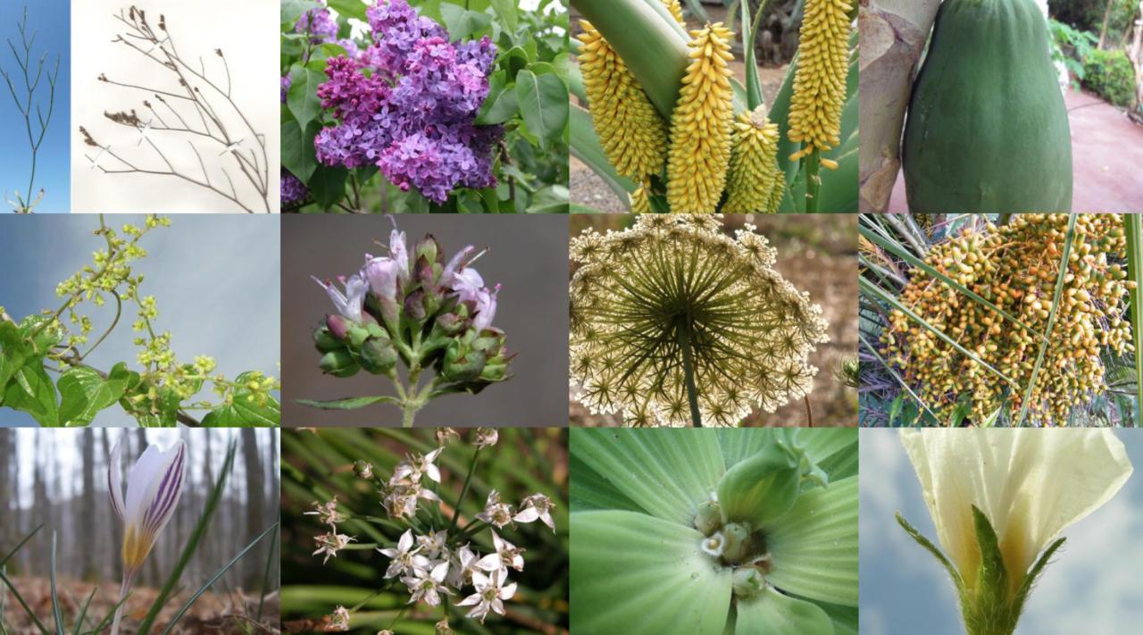 L orto botanico di padova u la tua italia