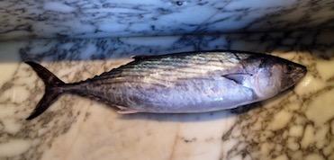 pesce azzurro_4