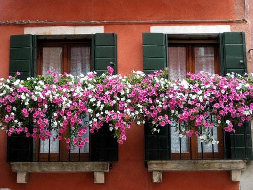 Balconi fioriti, come difenderli dall\'afa