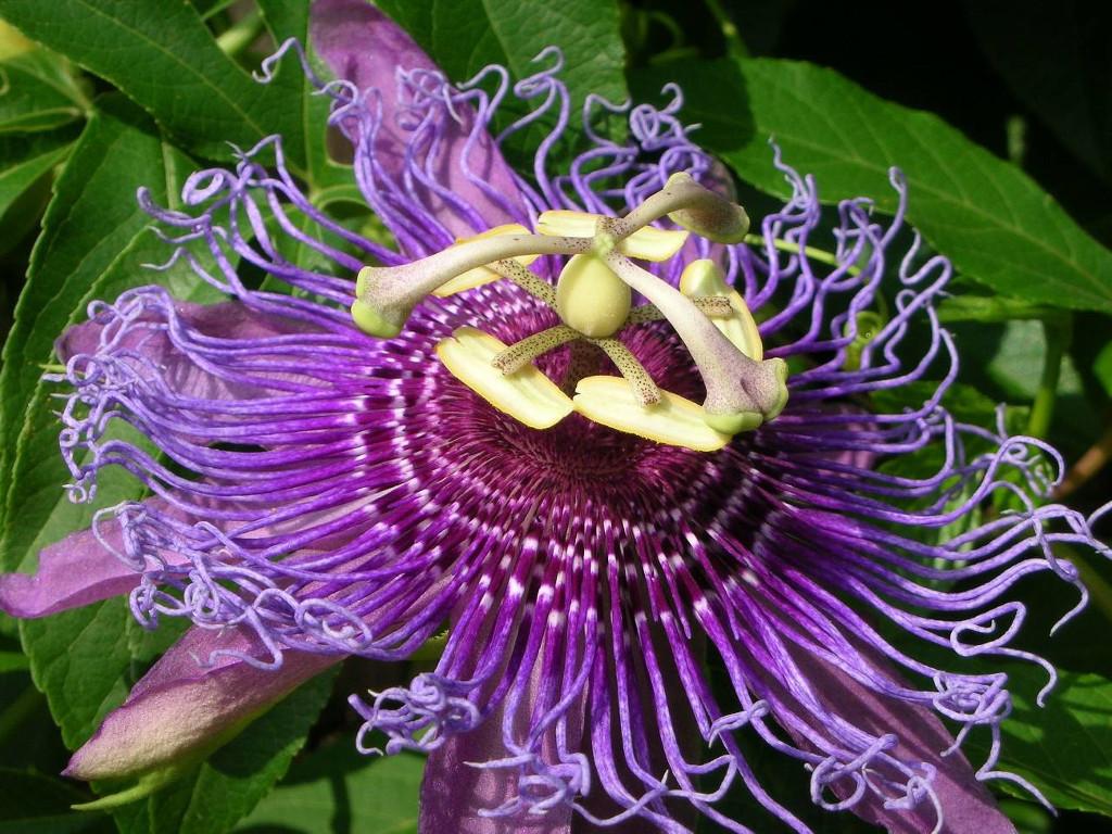 Borgo plantarum a settembre un fine settimana tra fiori e for Piante rare