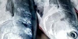 pesce-azzurro-min