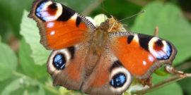 Giardino delle Farfalle
