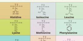 perche-assumere-aminoacidi-essenziali-2